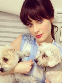 Perros de famosos: las perritas rescatadas de Zooey Deschanel