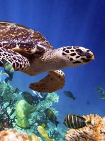 Soñar con tortugas: el éxito conseguido paso a paso