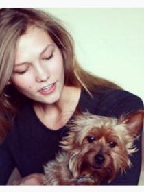 Perros de famosos: Joe, el yorkshire terrier de Karlie Kloss