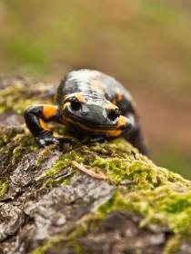 Soñar con salamandras: tu capacidad de superación