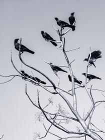Sueños: el significado de las pesadillas con pájaros