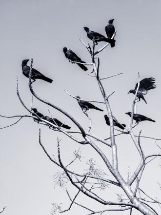 Significado de pesadillas con pájaros
