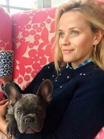 Perros de famosos: el frenchie o bulldog francés de Reese Witherspoon
