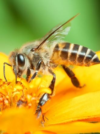 Soñar con picaduras de abeja