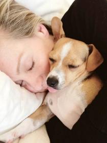 Perros de famosos: Kid, el Grifón de Portia de Rossi y Ellen DeGeneres