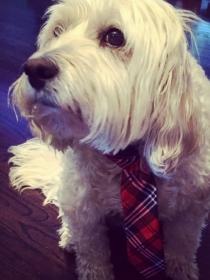 Perros de famosos: Watson, la mascota mestiza de Neil Patrick Harris
