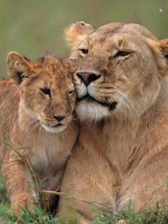 Soñar con animales salvajes