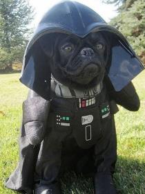 10 nombres para perros inspirados en Star Wars