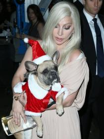 10 nombres para perros inspirados en la Navidad