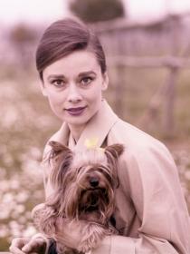 10 nombres para perros de películas clásicas de cine