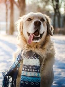 10 nombres de perros inspirados en la naturaleza
