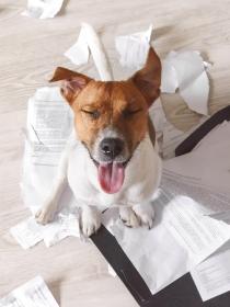10 nombres para perros ideales para las mascotas más traviesas