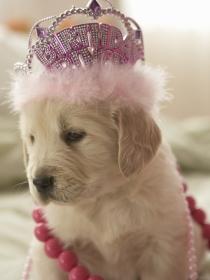 10 nombres de perros para las mascotas más elegantes