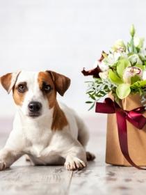 10 nombres de perros inspirados en flores
