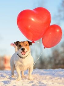 Los mejores nombres de perros inspirados en San Valentín