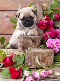 10 nombres de perros ideales e inspirados en la primavera