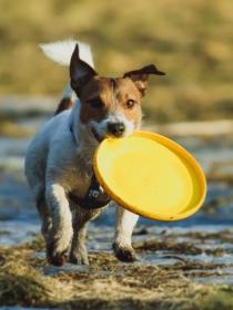 10 nombres de perros inspirados en el deporte
