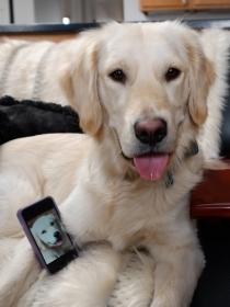 10 nombres de perros muy modernos inspirados en las nuevas tecnologías