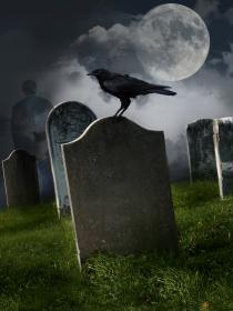 10 animales que predicen la muerte