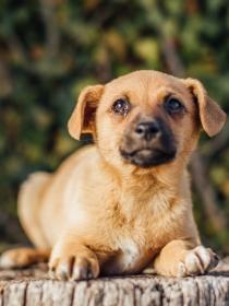 Por qué el nombre de tu perro puede definir su personalidad