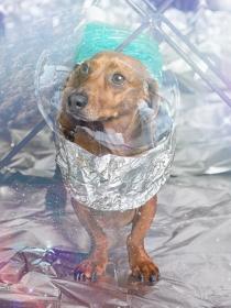 10 nombres de perros inspirados en el espacio y la astronomía