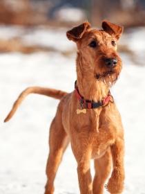 10 nombres de perros inspirados en el frío invierno