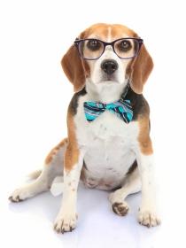 Si eres un friki, tienes que llamar así a tu perro
