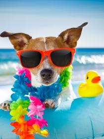 Llega el verano y las nuevas ideas de nombres para tu mascota