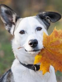 Inspírate en el otoño para escoger un nombre para tu perro