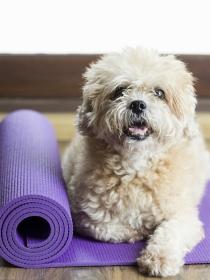 Descubre el doga, el yoga para perros