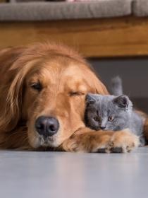 Soñar con perros muertos: las pesadillas con animales