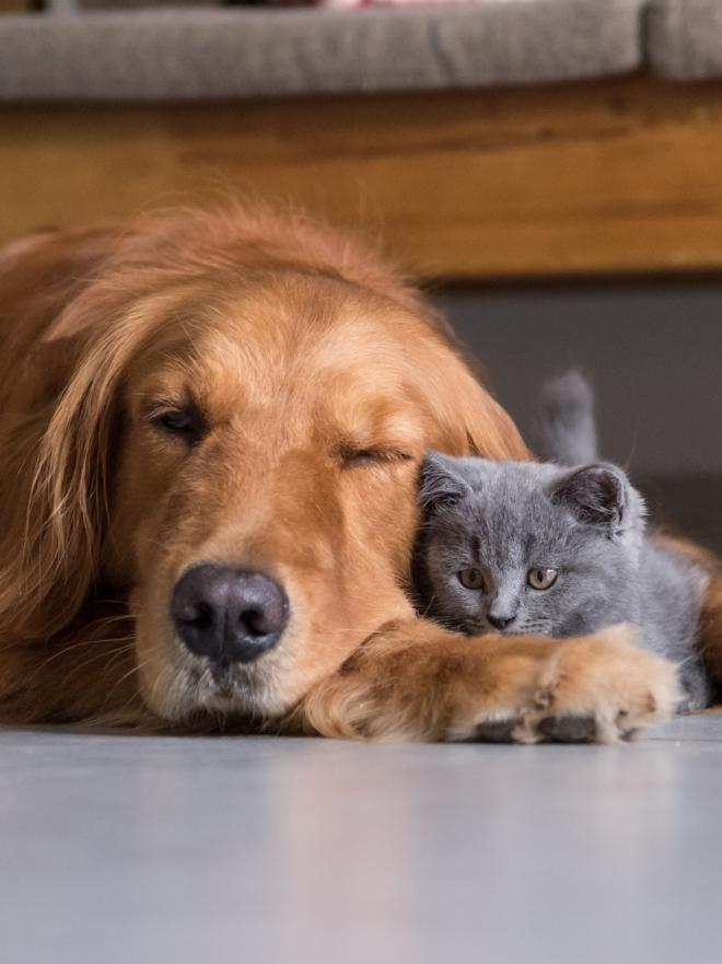 Soñar Con Perros Muertos Las Pesadillas Con Animales