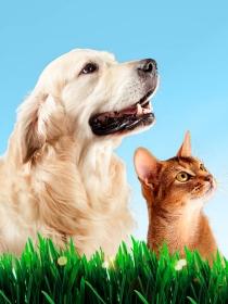 Los mejores nombres si tienes un perro y un gato como mascotas