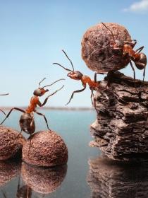 La fuerza que te da soñar que eres una hormiga