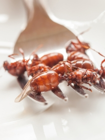 Soñar que comes hormigas: ¿te atreves con todo?
