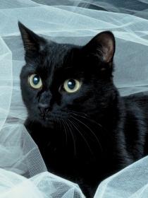 Soñar con gatos negros: ¿mala suerte?