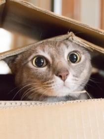 Soñar con gatos muertos: presta atención a tus sueños