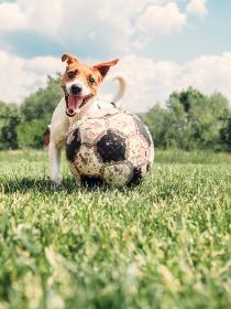 Nombres de perros inspirados en entrenadores de fútbol