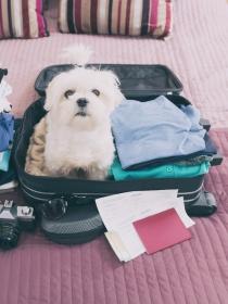 Viajar con mascotas: cómo hacer que tu perro no lo pase mal