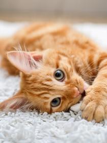 La fortuna de tener un gato en tu vida