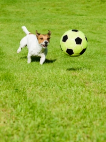 Nombres de perros inspirados en jugadores de fútbol