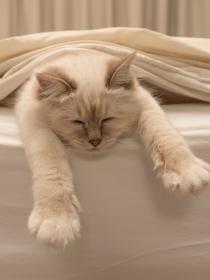Dormir con tu gato, ¡cuando todo son beneficios!