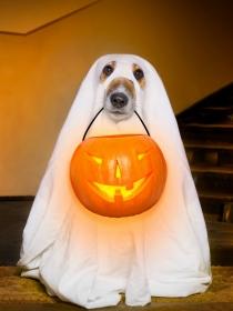 Inspírate en Halloween para elegir el nombre de tu perro