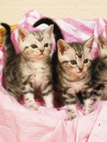 Soñar con muchos gatos: buenas vibraciones