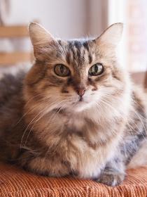 Consejos para hacer fotos divertidas y originales a tu gato