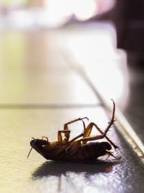 Soñar con cucarachas en la boca: cuidado con el estrés