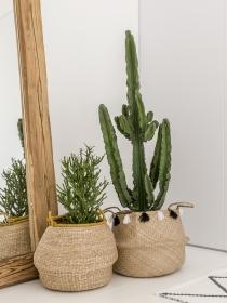 El problema del Feng Shui y los cactus: Dónde debes evitarlos