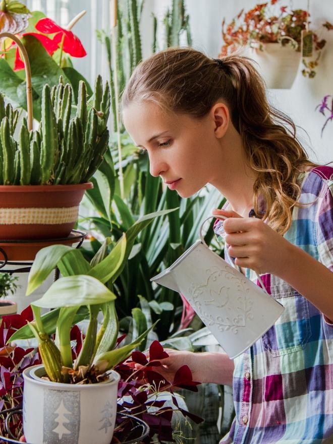 Feng Shui 8 Plantas Que Atraen La Mala Y La Buena Energía