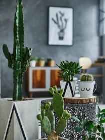 ¿Los cactus dan mala suerte? ¡Cuidado si tienes uno en casa!