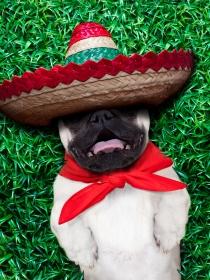 Originales nombres mexicanos para perros